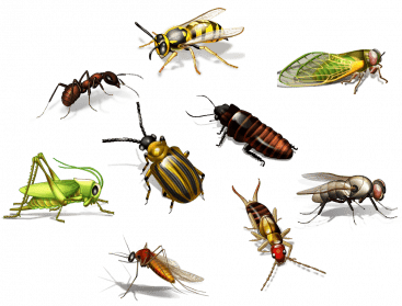 Insect-PNG-Transparent-Picture-367×279
